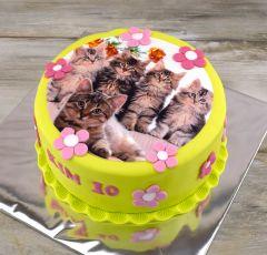 Torta s mačkami